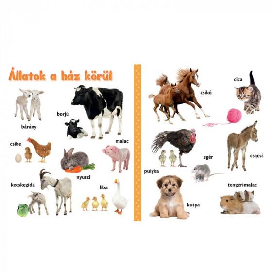Állatkölykök - vidám, képes lapozgató